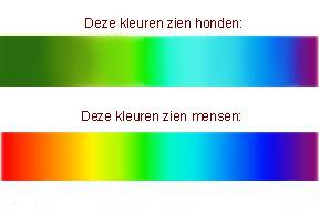 honden zien kleuren